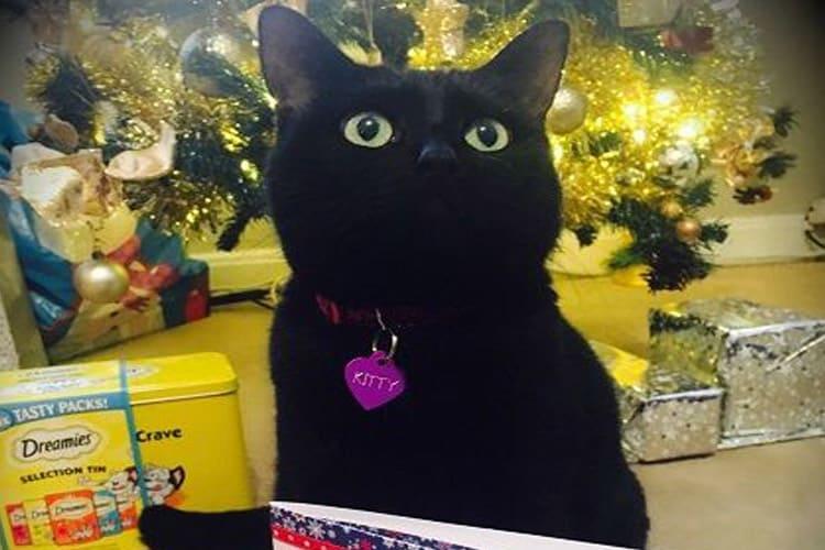 December 2018: Kitty