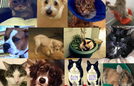 Vote for pet of the year 2017