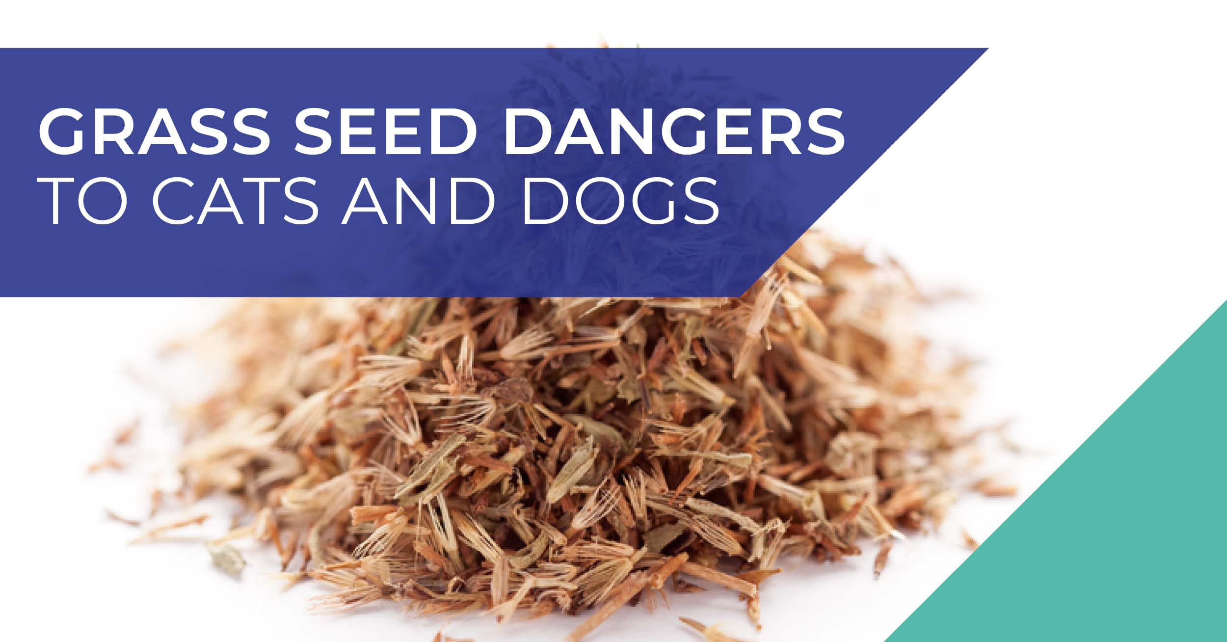 Grass seed dangers to cats and dogs