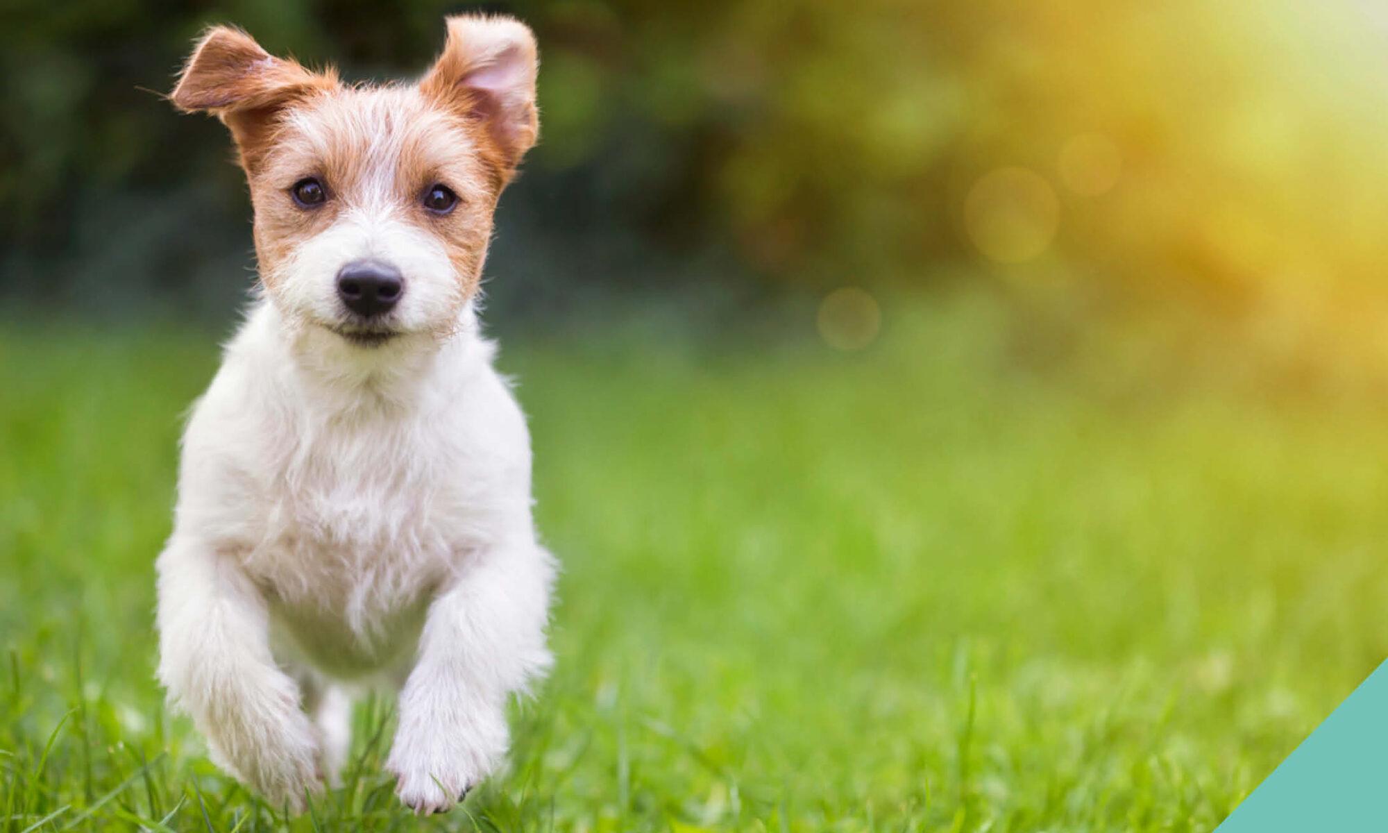 Dog Neutering