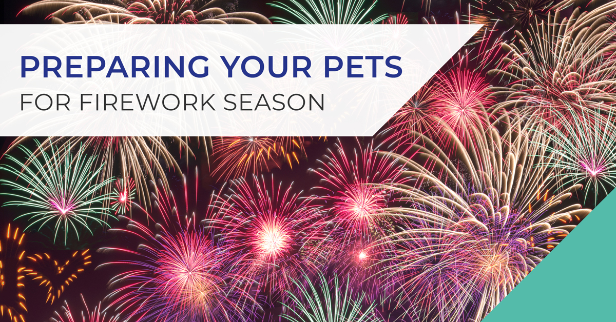 Preparing your pets for fireworks