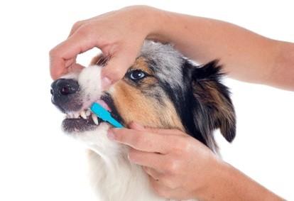 dog-brush