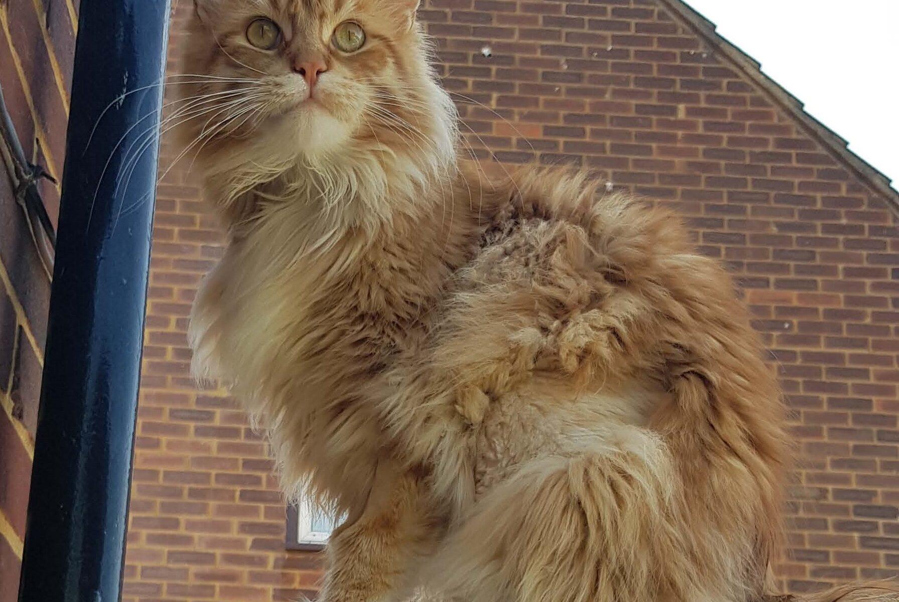 ginger cat sat on patio edge