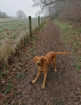 dog enjoying a muddy walk