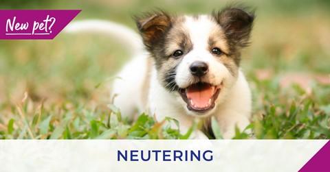 neutering